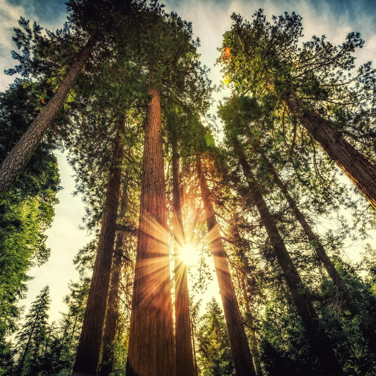MEAG erwirbt Waldflächen