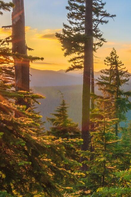 MEAG kauft US-Wälder mit Gesamtfläche vonIbiza